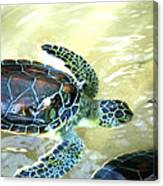 Tag Along Turtle Canvas Print
