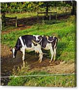 Tail Of Two Cows Canvas Print