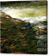 Beautiful River Canvas Print