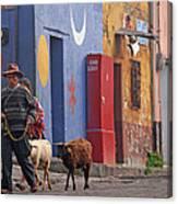 Taking Sheep To Market At Chichicastenango Canvas Print