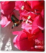 Taking The Nectar Canvas Print