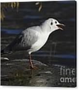 Talking Bird Canvas Print
