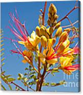 Tall And Bright Canvas Print