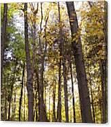 Tall Fall Trees Canvas Print