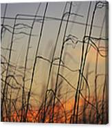 Tall Grasses Blowing In The Wind Canvas Print