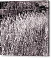 Tall Grasses Canvas Print