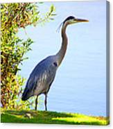 Tall Grey Heron Canvas Print