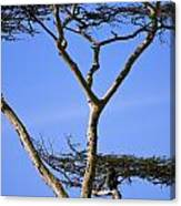 Tall Serengeti Tree And Baboon Canvas Print