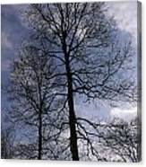 Tall Silhouetted Trees Canvas Print