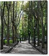 Tall Trees Of Madrid Canvas Print