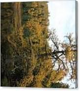 Tamarack In Fall Canvas Print