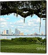 Tampa Skyline Through Old Oak Canvas Print