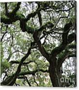 Tampa Trees Canvas Print
