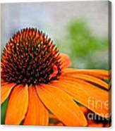 Tangerine Summer Canvas Print