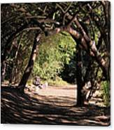 Tangled Arch Canvas Print
