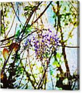 Tangled Wisteria Canvas Print