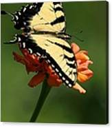 Tantalizing Tiger Swallowtail Butterfly Canvas Print