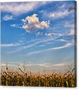 Tassels And Sky Canvas Print
