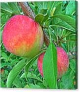 Tasty Organic Plums Canvas Print
