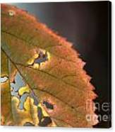 Tattered Leaf Canvas Print