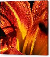 Tawny Daylily And Raindrops Canvas Print