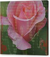 Tea Rose - Asia Series Canvas Print