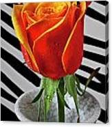 Tea Rose In Striped Vase Canvas Print