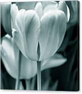 Teal Luminous Tulip Flowers Canvas Print