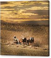 Team Of Four Horses Canvas Print
