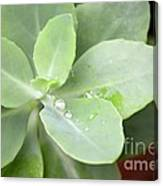 Tears Of Raindrops Canvas Print