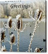 Teasel With Frost Canvas Print