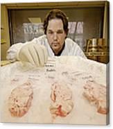 Technician Examines Human Brain Sections Canvas Print
