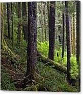 Temperate Rain Forest, Carmanah-walbran Canvas Print