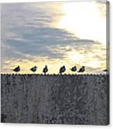 Ten Seagulls Stand On Top Of Stucco Wall Canvas Print