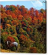 Tennessee Fall Canvas Print