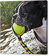 Tennis Ball Mist Canvas Print