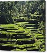 Terraced Rice Fields On Bali Island Canvas Print