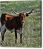 Texa Longhorn Canvas Print