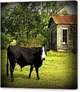 Texas Lawn Mower Canvas Print