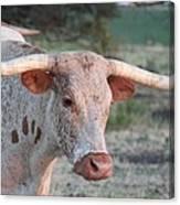 Texas Longhorn Portrait Canvas Print