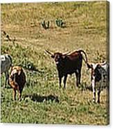 Texas Longhorns Panoramic Canvas Print