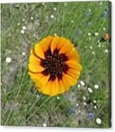 Texas Wildflower Canvas Print