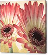 Textured Gerbras Canvas Print