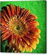 Textured Orange Flower Canvas Print