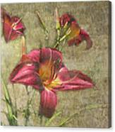Textured Red Daylilies Canvas Print