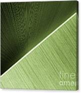 Patterns And Colors. Green. Canvas Print
