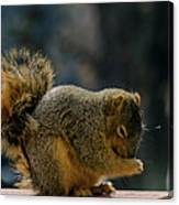 Thank You For The Nuts Canvas Print