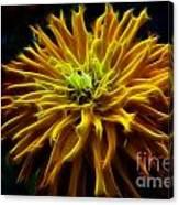thank you Zinnia Flower Canvas Print