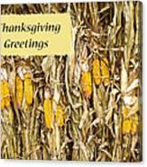 Thanksgiving Greeting Card - Dried Corn Stalks Canvas Print