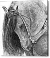 The Andalusian  Canvas Print